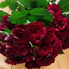 薔薇/ドライフラワー 房咲きの赤い薔薇が 満開です😃 半分だけ…