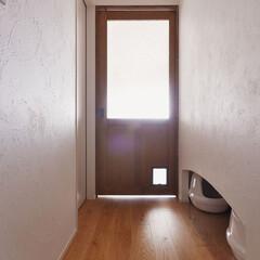廊下/ペット/猫/猫トイレ/アール/アーチ