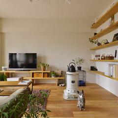 珪藻土 TV台と本棚は、ツーバイ材で造作し、壁面…
