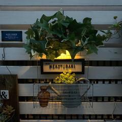 多肉植物/フェンスガーデン/ガーデニング/レターボード/焼き網リメイク/ソーラーライトリメイク/... ダイソーの壁掛けカゴと ソーラーライトを…