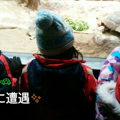 カメ🐢/動物園/円山動物園/おでかけ 北海道円山動物園でカメ🐢の給餌に遭遇した…