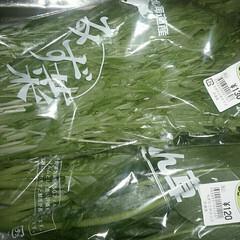 水菜とホウレンソウ/野菜買い出し/おでかけ 野菜買いに行ったら水菜とホウレンソウが安…