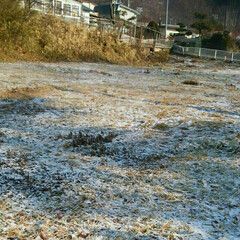 雪/空き地/登校中 家から離れた空き地 サラッと雪が。