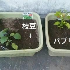 プランター/家庭菜園 プランターに買ってきた苗を植えました😄 …