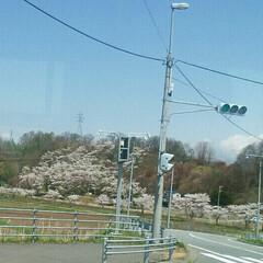 桜🌸/おでかけ 帰りのバスで桜🌸撮りました😄