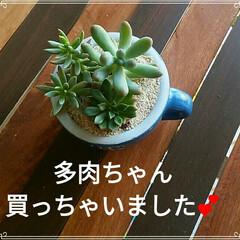 ミニテーブル/多肉ちゃん/DIY 先日多肉ちゃん買っちゃいました💕 マグカ…(1枚目)