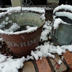 冬/雪/初雪 初雪〜!  寒いはずだ…🤐