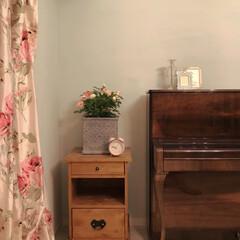 ローラアシュレイ/薔薇/ピアノ/ペトロフ/アニースローン/DIY 薔薇が売っていたのでまた買ってしまいまし…