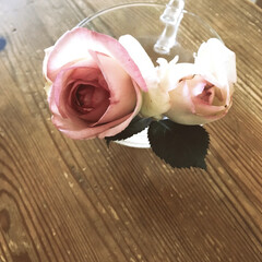 ピエール/ローズガーデン/薔薇