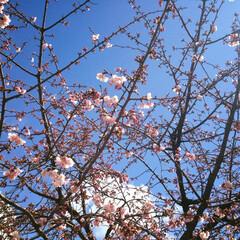 春の一枚/春/桜/卒業式/娘/懐かしい写真/... 過去の記録から懐かしい写真を一枚・・・ …