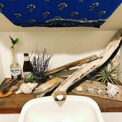 トイレリメイク/トイレDIY/海を感じる雑貨/海を感じるインテリア/流木リメイク/フォロー大歓迎/... 海の拾い物でトイレの飾り。 全部拾い物だ…
