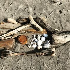 素材/流木/浜辺/海/DIY/雑貨 浜辺で素材集め。 海には何でもあります。