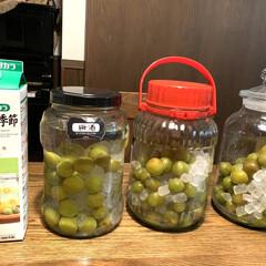 氷砂糖/リンゴ酢/梅酒作り/梅シロップ/うちの定番料理 3度目の梅仕事 実家で収穫した青梅を ヘ…