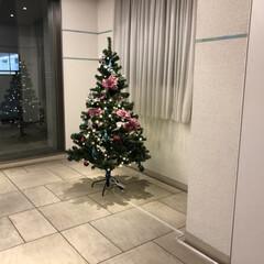 エントランス/クリスマス/クリスマスツリー/住まい クリスマス(1枚目)