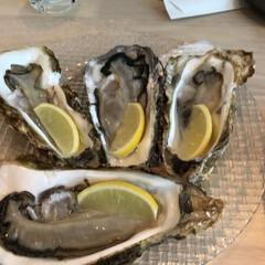 フード 牡蠣