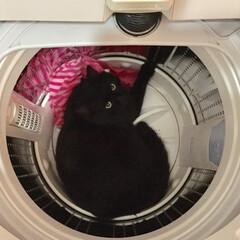 猫/ペット/うちの子自慢/にゃんこ同好会/ペット仲間募集中/猫あるある 家の中のどこにもいないなぁ???と探して…