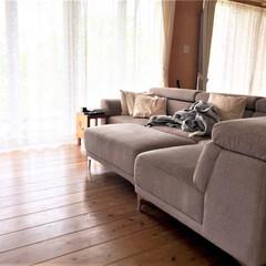 私の家/ここが好き/私の家のここが好き/ソファ/リビング/インテリア/... 大きなソファにしてから、ここが家族のたま…