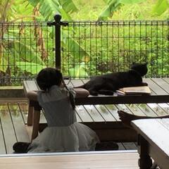 ここが好き/私の家/デッキ/雨の日/家づくり/猫/... 陽射しの強い宮古島。 デッキにかかる庇も…