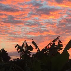 秋の一枚/秋の空/神秘的/朝焼け/沖縄/秋らしい/... 沖縄の秋の朝焼け。 この季節の朝焼けは6…