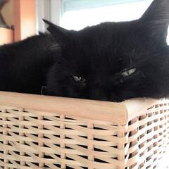 黒猫/猫/ペット/我が家/癒し/無印良品/... もはや何なのかわからない物体になっていま…(1枚目)