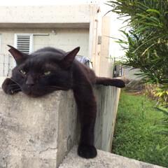 うちの子自慢/とにかくカワイイ/黒猫/猫/ペット/フォロー大歓迎/... 暑い日の夕方はここの塀の上で寛ぐのが定番…