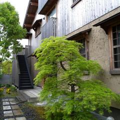 2世帯住宅/杉板 アプローチと庭が共有部分の「2階建て長屋…