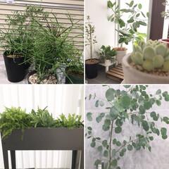 台風接近中/植物達を避難/グリーンのある暮らし/植物のある暮らし/モノトーンインテリア/グレーインテリア/... 台風直撃のため植物達を家の中へ避難させま…(1枚目)