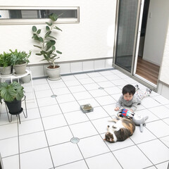 リビング/中庭/一緒にお昼寝/猫/ペット/インテリア/... 犬猫あるあるフォトコンテスト応募用◡̈ …