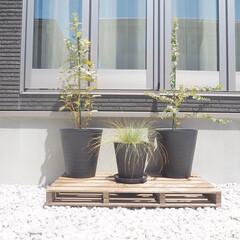 すのこDIY/ユーカリ/グリーンのある暮らし/黒い外壁/グレーインテリア/ウォールナット/... すのこでパレット風の鉢台を作りました◡̈…
