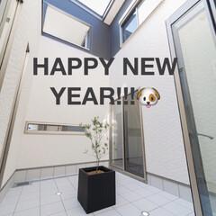 オリーブ/中庭の外壁は白/真四角の家/口の字型中庭/中庭/あけましておめでとうございます🌅🎍/... あけましておめでとうございます🎍 今年も…