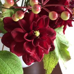 赤い花/ヒマワリ/ダリア/花のある暮らし/夏インテリア/お庭あそび 先週に生けた花、買ったグリーンのバラと、…(2枚目)