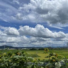 青空/雲/夏空/空/夏の終わり 夏の終わり…少し前の写真。  今では田ん…(1枚目)