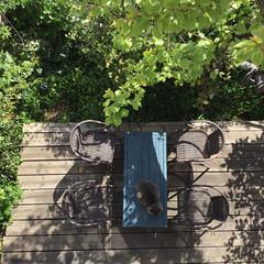 新緑/モッコウバラ/エクステリア/庭/ウッドデッキ/ウッドデッキDIY/... 我が家の庭 上からの撮影 春になって杏の…