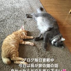 猫部/ねこ/猫/猫と暮らす/猫のいる暮らし/ブログ ブログ毎日更新中 良かったらお立ち寄り下…(1枚目)