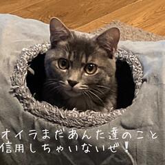 ねこ同好会/ねこ/猫/リビング/カフェ風 ふー祭りは出来ない💧 何せ人がいるとト…(1枚目)