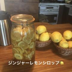 ジュース/ジンジャーレモンシロップ/レモン/手作り/暮らし 実家からレモンをもらったので ジンジャー…
