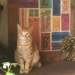 猫部/猫/ネコ/ねこ/ねこ部 自分が置物かと思っているのか 見栄えする…