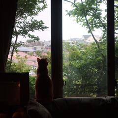 KEYUCA/ペット/猫部/緑のある景色/Pana Home この景色が好きでこの場所に住んだ我が家 …