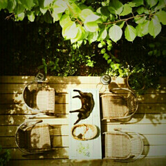 机/ウッドデッキ/エクステリア/庭/カフェ風/DIY 新緑の季節のウッドデッキは絶好のカフェス…
