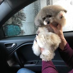 洗車/ペット/犬 あめちゃん🐶連れて🚗 ³₃の洗車行く時の…
