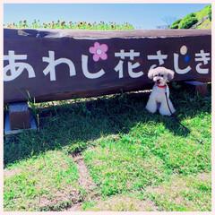 ペット/グルメ/フード/おでかけ 淡路島〜〜♪(๑ᴖ◡ᴖ๑)♪ 只今淡路島…(6枚目)