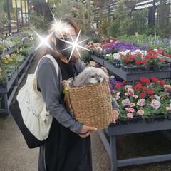 「この間観葉植物欲しくて買いに行ったけど、…」(2枚目)