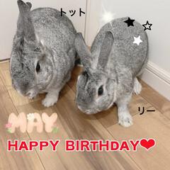 お兄ちゃん🐰/あめちゃん/トット🐰&リー🐰/お誕生日おめでとう 今日は、トット🐰&リー🐰のお誕生日なんで…