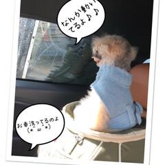 ハロウィン/ペット/犬/スイーツ/掃除/おでかけ/... 今日は、お天気☀️良かったからあめちゃん…(7枚目)
