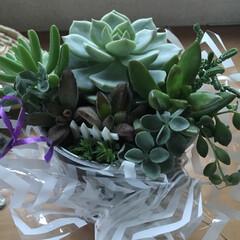 ガーデニング植物 友達のバースディに 寄植えプレゼント