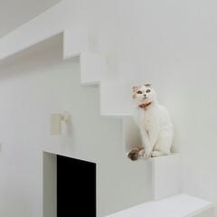 建築/住まい/猫と住む家/猫と暮らす家/キャットウオーク/建築家と建てる家/... キャットウオーク  初めて壁にキャットウ…