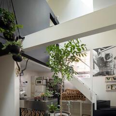 建築/住まい/狭小住宅/モルタル床 リビングに木々を飾って  モルタル床なの…