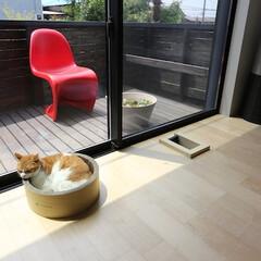 建築/住まい/建築デザイン/猫と住む家/猫と暮らす家 くつろいでる猫 ハコノオウチ15