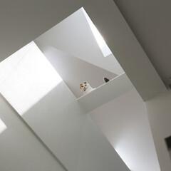 建築/住まい/猫と住む家/猫と暮らす家/デザイン住宅/建築家と建てる家/... 猫のキャットウオーク・石川淳建築設計事務…