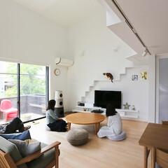建築/住まい/建築デザイン/猫と住む家/猫と暮らす家 猫を見ながら団らん ハコノウチ15